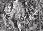 Quail ecology and management project report